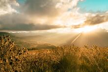 Frailejones Guerreros Del Tiempo En Tierra De Nubes   Vistas Del Paramo Y El Nevado De El Cocuy Y Güicán Boyacá En Un Vallé De Frailejones Un Poco De Conciencia De Protección A Estos Lugares Su Fauna