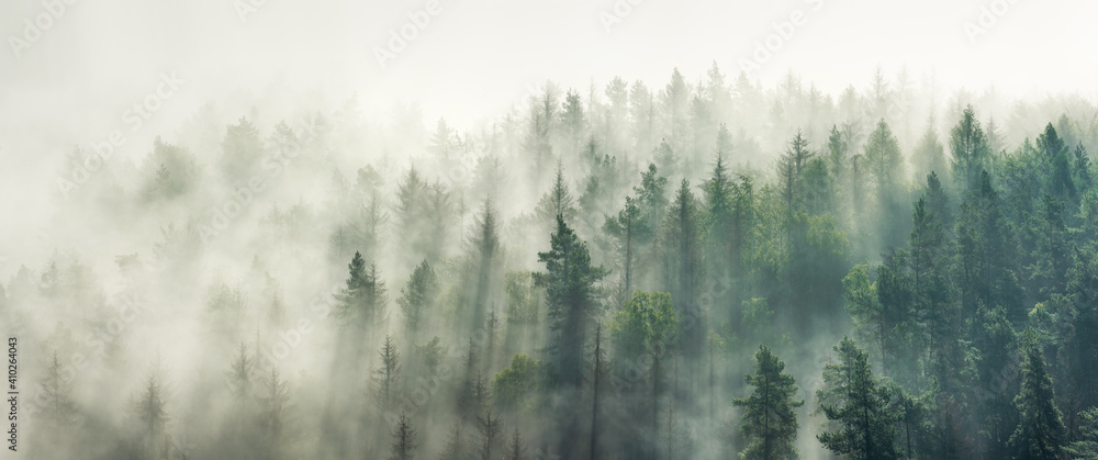Fototapeta Panoramic view of forest with morning fog