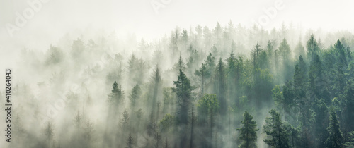 Fototapeta Panoramic view of forest with morning fog obraz