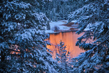 Lautersee River Seen Through Snow Covered Trees In Forest During Sunset