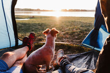 Legs Of Male And Female Friends With Dog Relaxing In Tent At Sunset