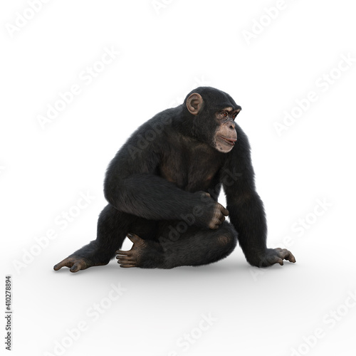 Photo Chimpanzee sitting leaning on one hand and looking sideways.