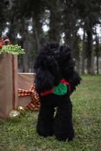 Christmas Photoshoot For Dog