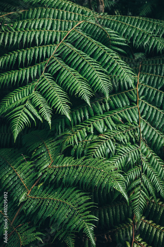 Close up of ferns in New Zealand forest