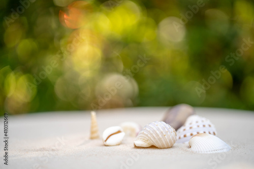 Canvas Print shells on sandy against nature bokeh background.
