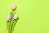 Fototapeta Tulipany - Beautiful tulip flowers on color background