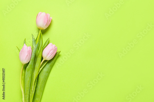 Fototapety, obrazy: Beautiful tulip flowers on color background