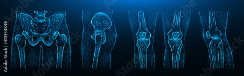 Obraz Polygonal vector illustration of the pelvis, hip joint and knees on a dark blue background. Human Anatomy medical template. - fototapety do salonu