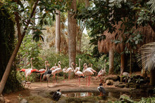 Large Group Of Flamingos Together In Bird Park Near The Lake