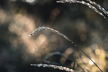 Fresh Forest Of Grass In Drops Of Morning Dew Sparkling In The Sunlight