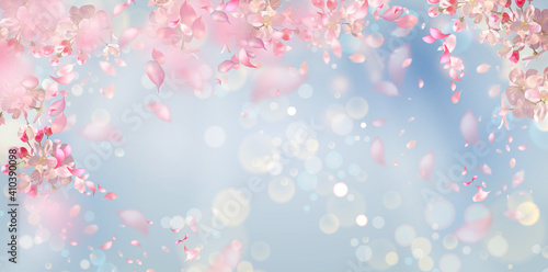 Fototapeta Vector background with spring cherry blossom