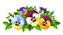 Vector Colorful Pansy Flowers Isolated On A White Background.