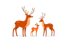 Deer, Stag And Fawn.  Flat Line Vector Illustration.