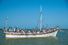 An Old Wooden Fishing Boat With Many Pelicans On The Starboard Side. Tropical Lagoon Of The Mexican Caribbean Sea. In The Background The Blue Sky.