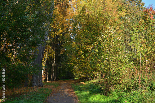 path in autumn park © Aleksandr Kalegin