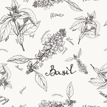 Seamless Pattern Of Sprigs And Flowers Of Basil On A Light Background.