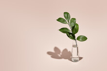 Green Leaf And Vase Minimal Summer Or Spring Still Life On Pastel Pink Table. Sunlight, Hard Shadow. Floral, Interior, Nature Concept