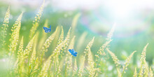 Wild Meadow Flowers In Field And Two Fluttering Butterflies On Nature, Close-up Macro. Magic Artistic Image Of Blue Butterfly In Spring With Lens Flares At Sunset.