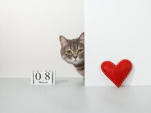 Grey Cat Peeps Out Of The Corner, Red Craft Heart, 8 March Calendar, On A White Background, Pet Concept. Copy Space.