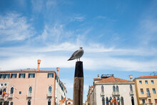 Pigeon In Venice Sitting On Wooden Pole Against Blue Sky On Main Channel. Traditional Italian Architecture On A Summer Day