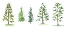 Green Pine Trees Watercolor Set. Fir Trees Silhouettes. Forest