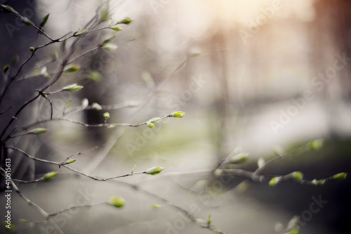 Background with green escapes on bush branches Fotobehang