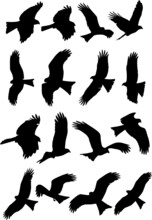 Eagle Shadow Set Of Silhouettes Of Birds