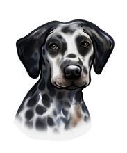 Dalmatian Dog Coloring Painting