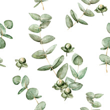 Floral Pattern With Leaves Of Eucalyptus And Berries Hypericum 1