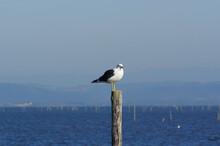 Beautiful Shot Of A Seagull Perching On A Tree Stumps On The Seashore
