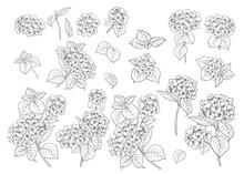 Set Of Line Art Hydrangea Motifs.