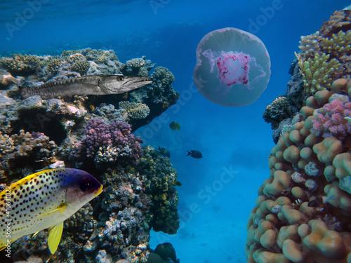 Slika na platnu Photo of a coral colony on a reef top, Red Sea, Egypt