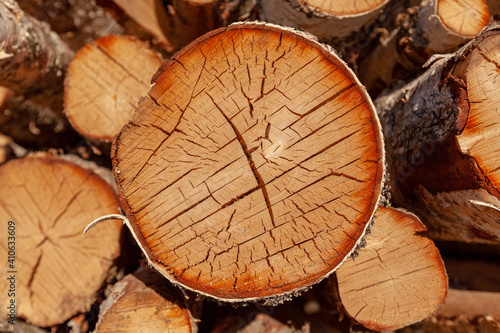 Fényképezés Cut birch trees, timber trade, timber obtained from the birch trees
