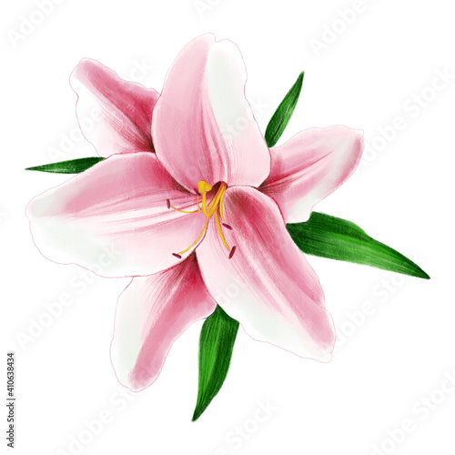 Billede på lærred Bush Pink Stargazer Lilies isolated on a white background
