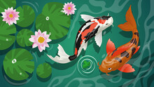 Koi Fishes Swiming In The Pond