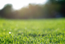 Lawn Background Image. (Blur Focus) Beautiful Outdoor Nature Wallpaper It Is A Fresh Green Meadow In The Back Is A Backlit Tree Line.
