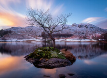 Tree On Rydal Water In The English Lake District