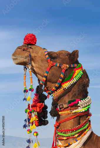 Photo Beautiful amusing decorated Camel on Bikaner Camel Festival in Rajasthan, India
