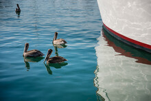 Pelicans Floating On The Water Near Boat Dock