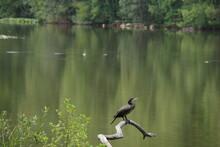 Reiher Am See In Homburg