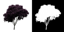 Left View Of Cercis Canadensis Tree. PNG With Alpha Channel To Cutout. Made From 3D Model For Compositing.