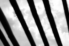 Textura De Troncos En Blanco Y Negro A Contraluz
