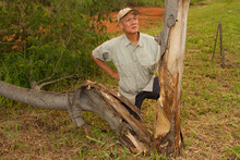 Biologist Out In The Savannas Of Brazil, Inspecting A Tree The Was Damage In A Thunderstorm