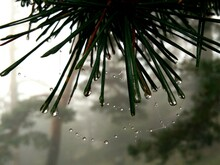 Close-up Of Raindrops On Branch
