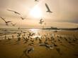 Birds Flying Over Beach Against Sky During Sunset