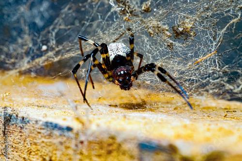 spider on the web Tapéta, Fotótapéta
