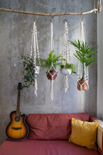 Handmade Cotton Macrame Plants Hanger Hanging From Wood Branch, Acoustic Vintage Black And Orange Guitar On Red Couch At Loft Style Apartment Over Concrete Wall.