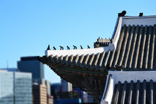 Korean Traditional Palace Roof With Animal-like Statue With The Modern Building And Blue Sky As The Background