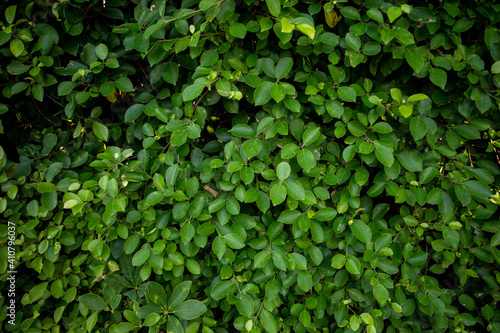 Foto Tree background - Stock Photo