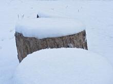 切り株の上に積もった雪